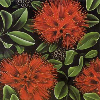 Pohutukawa By Diana Adams New Zealand Fine Prints
