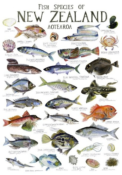 Fish species of new zealand poster for New zealand ling fish